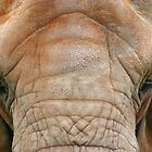 ELEPHANT EYELASHES by Helen Akerstrom Photography