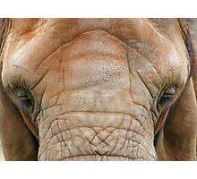 ELEPHANT EYELASHES Photographic Print