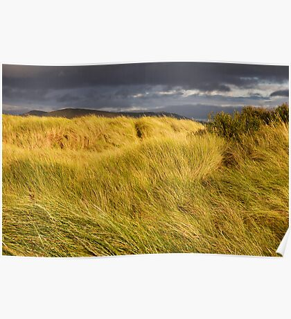 Windswept Grass Poster
