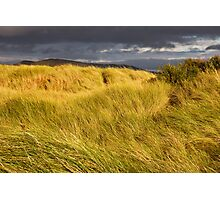 Windswept Grass Photographic Print