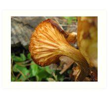 Mushroom Ruffle Art Print