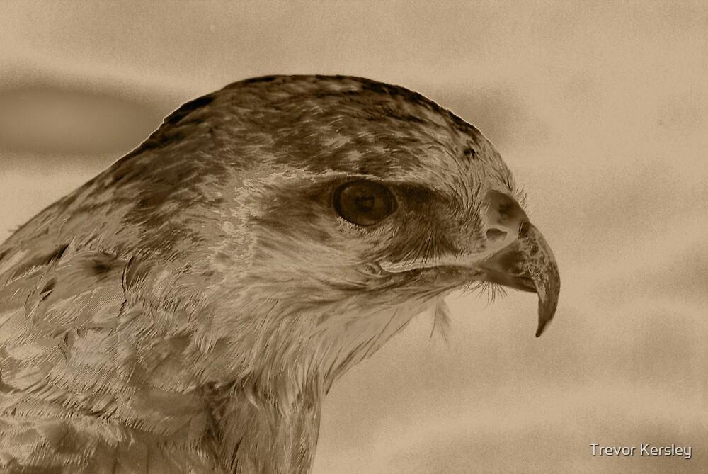 Hawk by Trevor Kersley