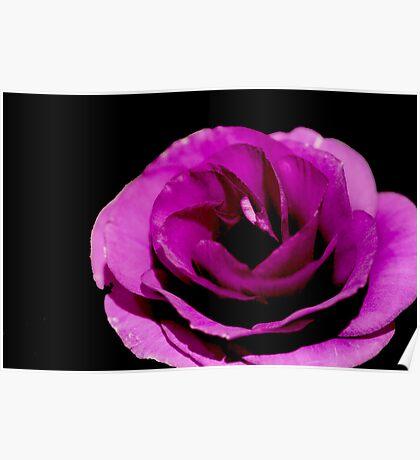 Flower: Purple Lisianthus III Poster