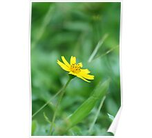 Flower: Yellow Daisy II Poster