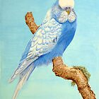 A Budgie in nature by aquartistic