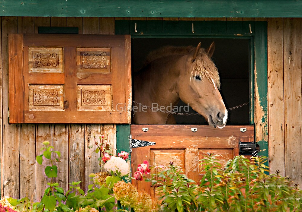 Beautiful Horse by Gisele Bedard