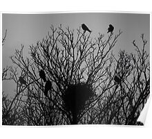 Crow Tree Poster