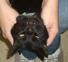 Some people just aren't cat lovers by LeeAnn Kramer