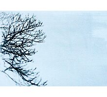 The side of a tree Photographic Print