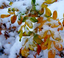The first snow. II by Bluesrose