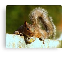 A Laid-back Squirrel  Canvas Print