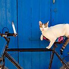 Moroccan Cat on a Bicycle by bevgeorge