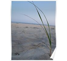 Dune Grass on the Beach Poster