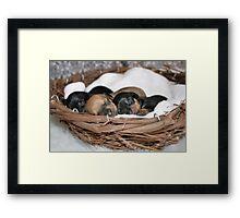 Basket Full of Puppies Framed Print