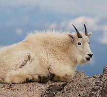 Happy Mountain Goat by Eivor Kuchta