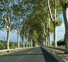 Avenue of Palatines Along the Road to Carcassonne by HELUA