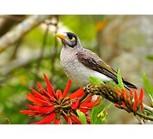 Our beautiful world, a noisy mynah and  flame tree Photographic Print