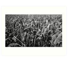 Wheat Field Art Print