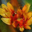 Petals by artsthrufotos