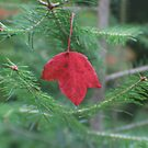 The Falling Leaf by Karen K Smith