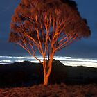 Flame Tree by Greg Wilson