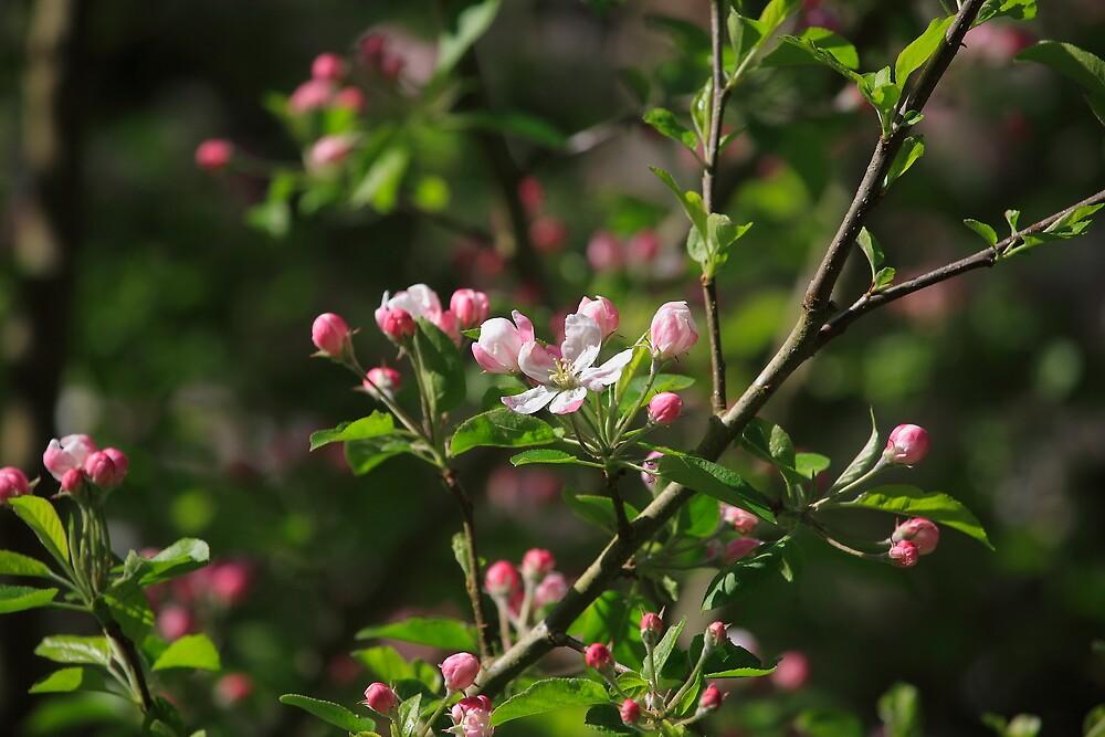 Spring Has Sprung by Ronda Sliter