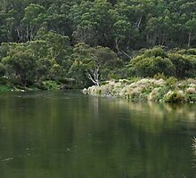 Thredbo River - reflections. by Richard  Stanley