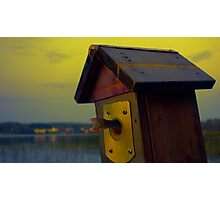 A fishtail coming out from a birdhouse entrance Photographic Print