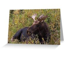 Young Bull Moose Greeting Card