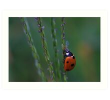 Ladybug On Grass Stalk Art Print