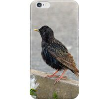 Lone Starling iPhone Case/Skin