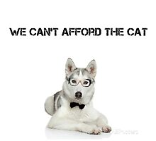 Sorry, We Can't Afford the Cat Photographic Print