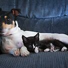 The Baby Sitter by Ronda Sliter