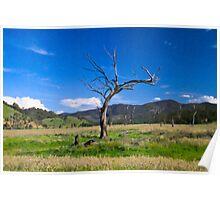 Spring safari, Lake Eildon 2009 Poster