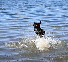 Its A Bird, Its A Plane, Its Super Dog by Ronda Sliter