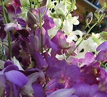 Oh Orchids! by MarianBendeth