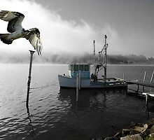 """Osprey Trawling"" Clarence River. NSW by Mike Larder"