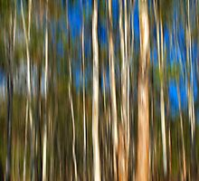 Among The Gum Trees by Kitsmumma