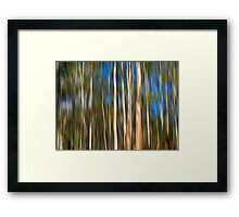 Among The Gum Trees Framed Print