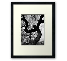 Creepy Faced Tree Framed Print