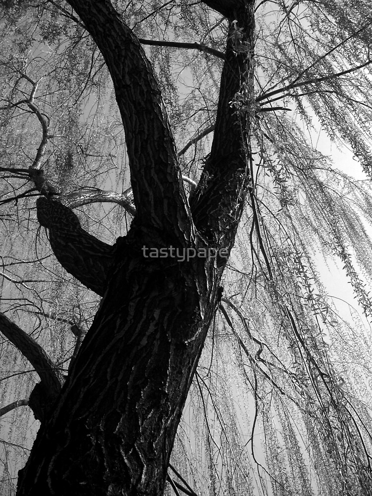 Willow by tastypaper