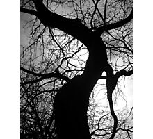 Branched Mantel Photographic Print