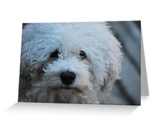 Jak the Bichon Greeting Card