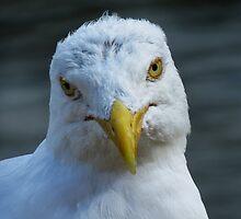 Seagull selfie by Sue Purveur
