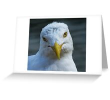 Seagull selfie Greeting Card