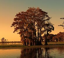 Louisiana bayou at sunset by jekuratodistaja
