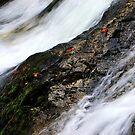 Falls Creek Falls III by Lisa G. Putman