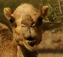 Emirates Camel by Sturmlechner