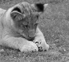 lion cub 'captures' a rock by nikivandersmagt