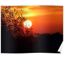 sunset behind a willow - South Africa Poster